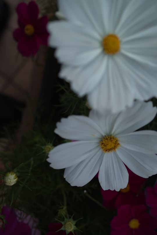 20111015F.jpg